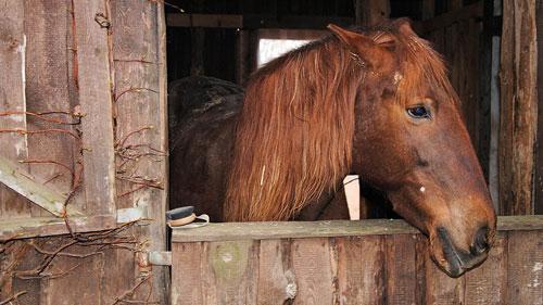Ein Pferd im Stall