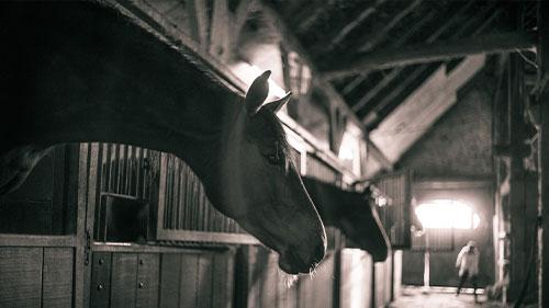 Pferde im Stall