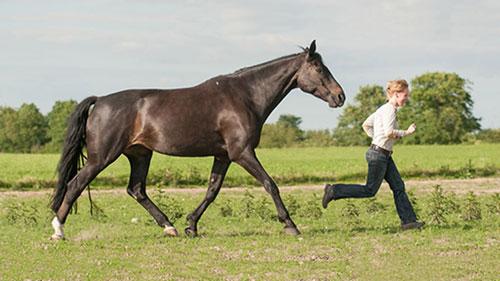 Ein Pferd und ein Mensch laufen gemeinsam