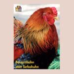 "Postkarte ""Bauernhahn statt Turbohuhn"""