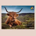 Kuh auf einer Wiese, Postkarte