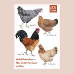"""Postkarte Hühner """"Vielfalt bewahren - alte """"Nutz""""tierrassen"""""""