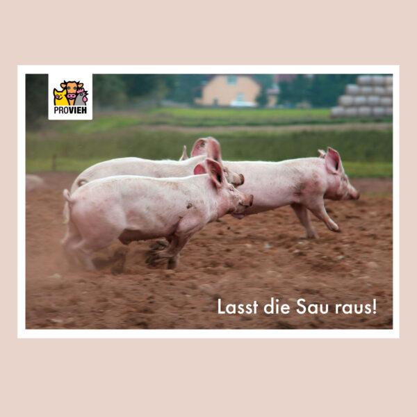 """""""Lasst die Sau raus!"""", Postkarte, 3 Schweine"""