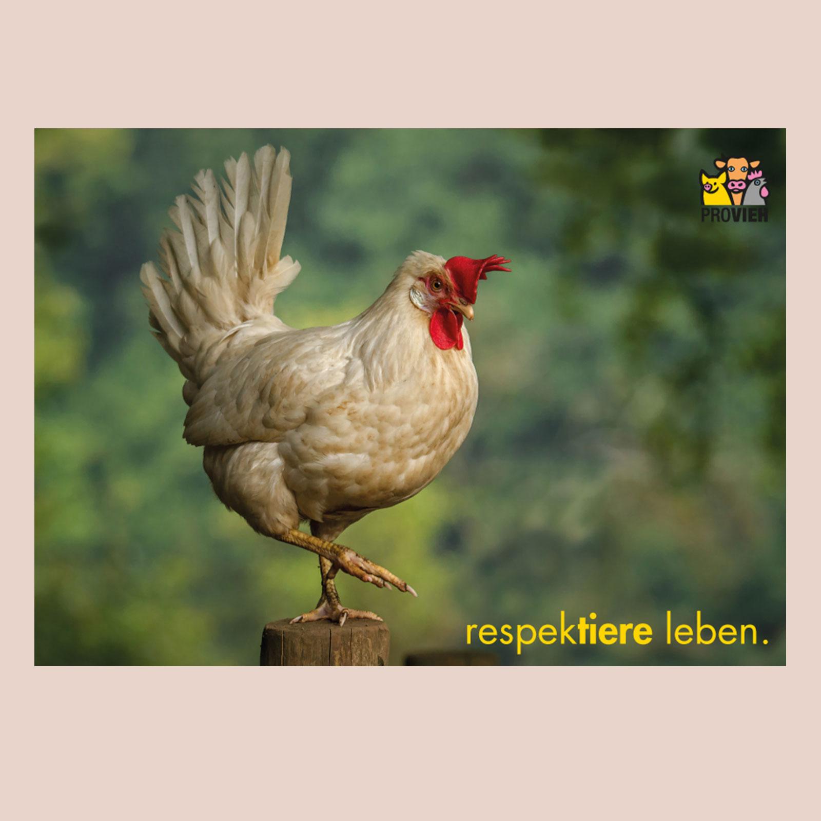 Postkarte Huhn