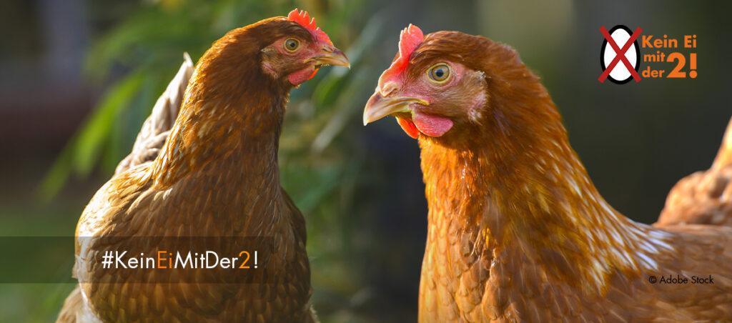 zwei Hühner im Freien