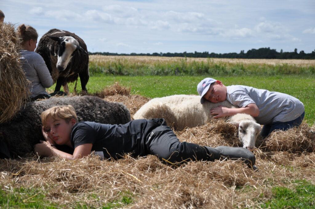 Drei Kinder kuscheln mit Schafen