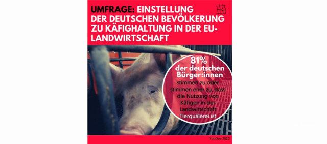 Informationen zur Käfighaltung mit einem Bild vom Schwein