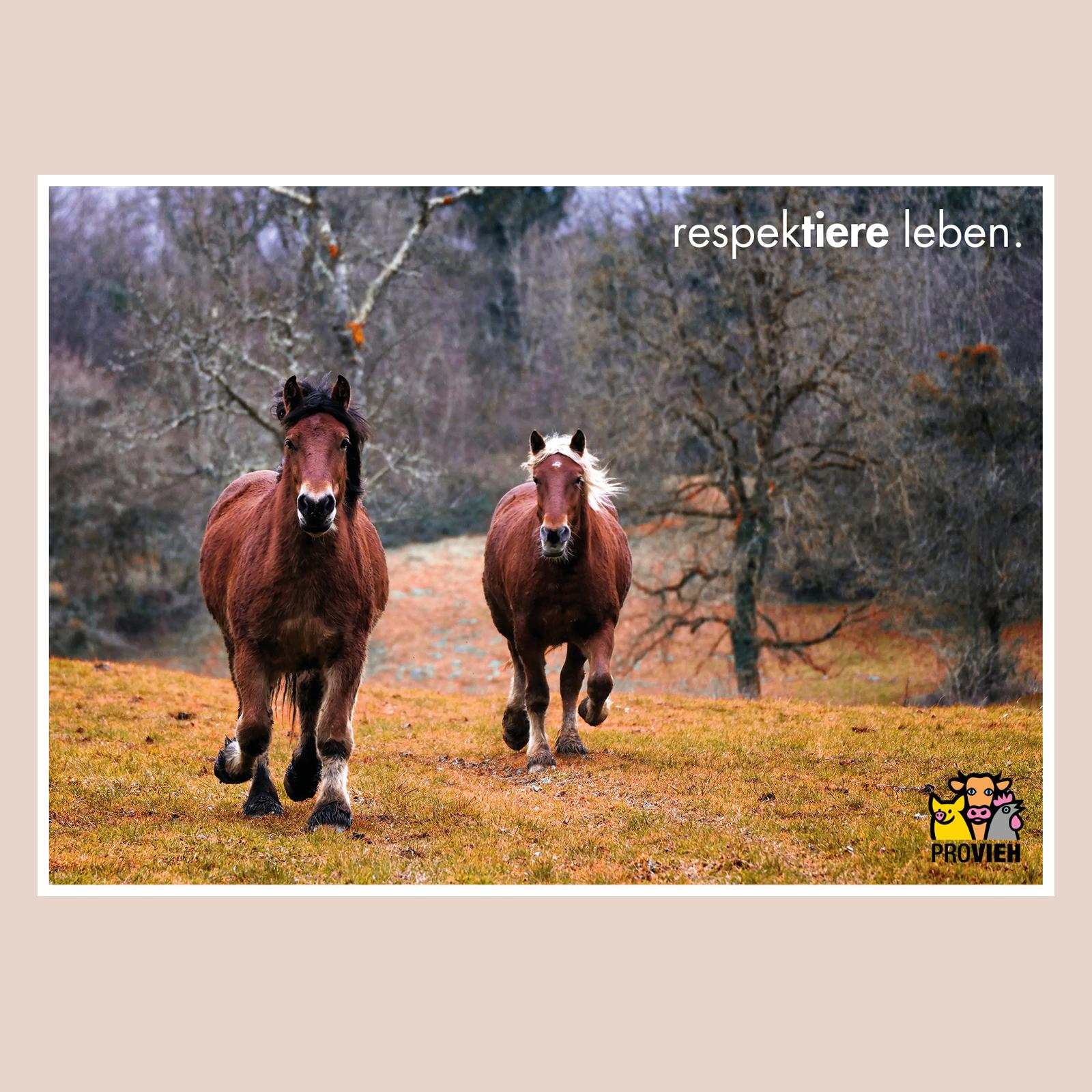 "Postkarte Pferde ""respektiere leben."""