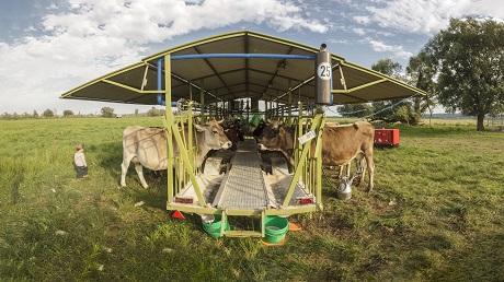 Futterstelle mit Kühen auf einer Weide