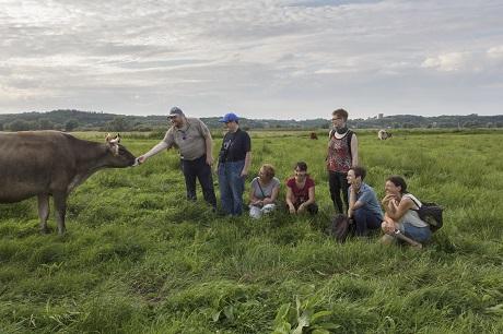 Stolze Kühe auf einer Wiede