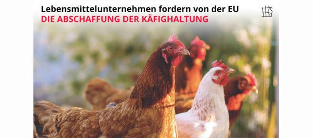 Hühner die durch einen Zaun schauen