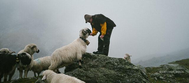 Ein Schäfer und ein Schaf