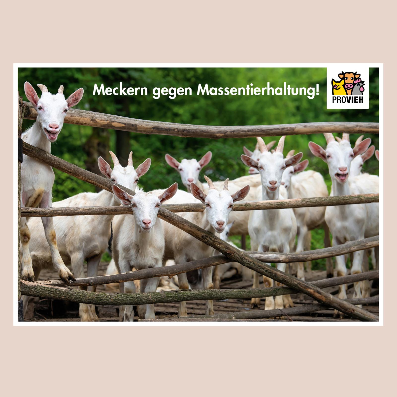 """Postkarte Ziegen - """"Meckern gegen Massentierhaltung"""""""