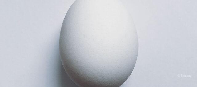 Ein Ei auf weißem Grund