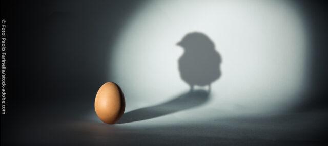 männliche Küken sollen bereits im Ei aussortiert werden