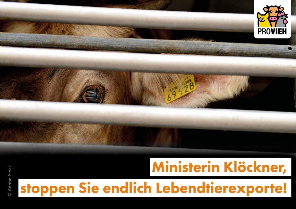 Ministerin Klöckner, stoppen Sie endlich Lebendtierexporte!