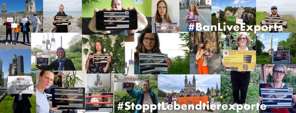 Collage zum Aktionstag gegen Tiertransporte