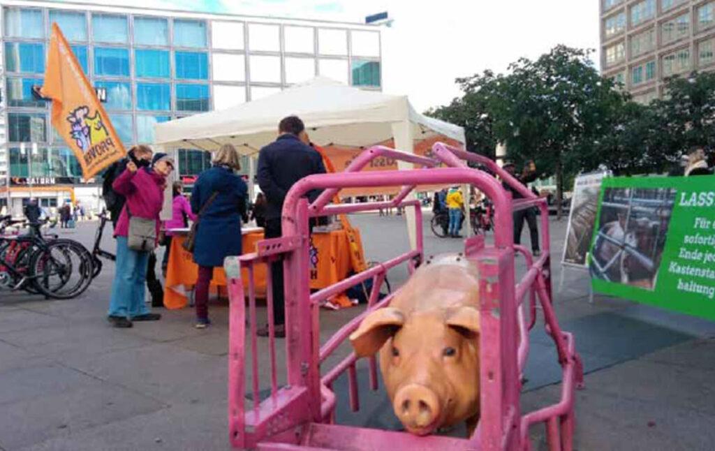Aktionstag, Schweinestatur im Kastenstand