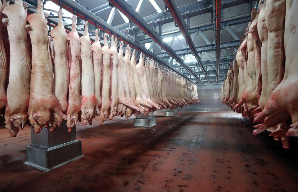 Schweinehälften am Fleischerhaken