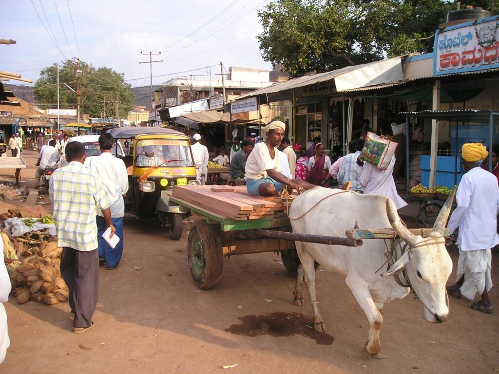 Eine Kuh auf der Staße Indiens