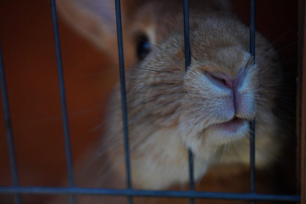 Ein Kaninchen in einem Käfig