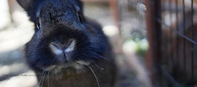 Ein Kaninchen schaut in die Kamera