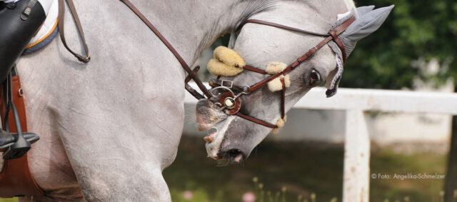 Springsport Pferd