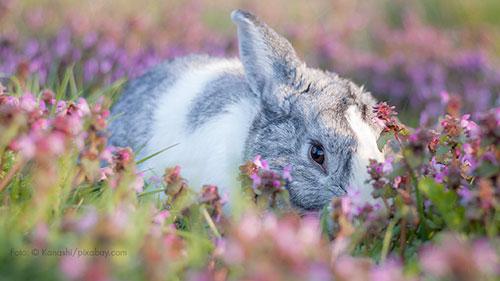 Ein Kaninchen im Blumenfeld