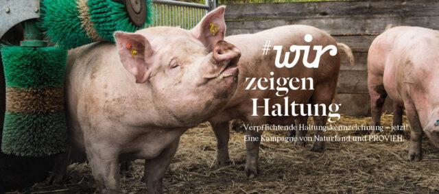 Kampagne Wir zeigen Haltung - Schweine mit Bürste