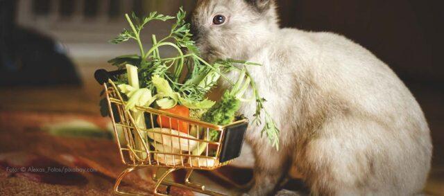 Ein Kaninchen an einem Futterkorb